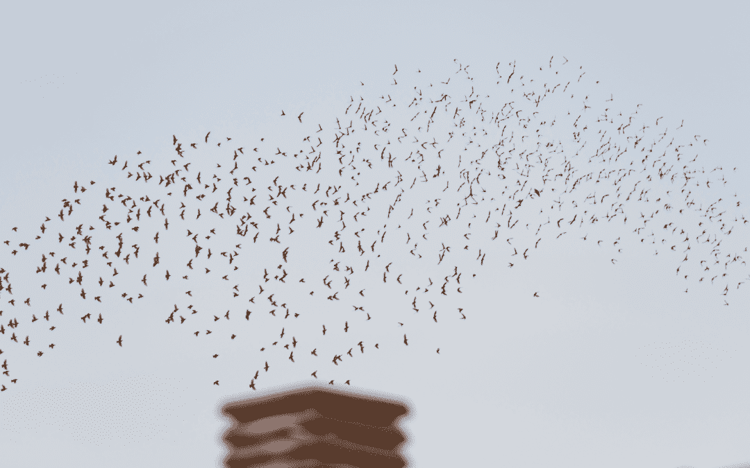 A flock of birds fly over a chimney